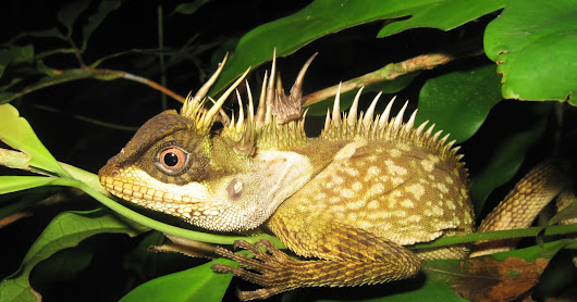 163 new species discovered in in Cambodia, Laos, Myanmar, Thailand and Vietnan