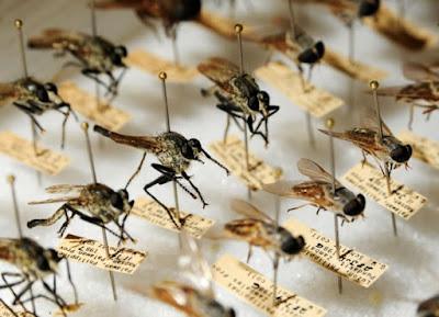 Colección de la división entomológica y de medicina preventaiva de la US Navy