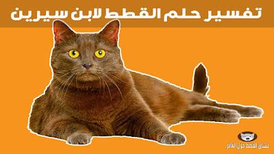 تفسير حلم القطط لابن سيرين ورؤية كل أنواع القطط