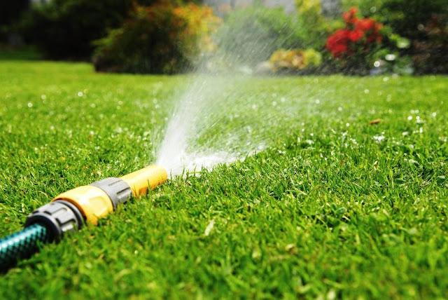 siram rumput pagi dan sore
