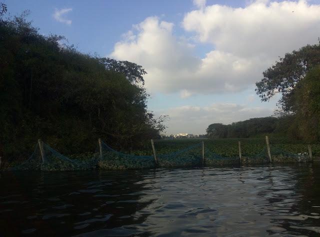 Madiwala Lake Island