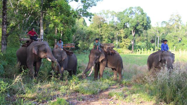 Avec les autres éléphants d'Aïravata
