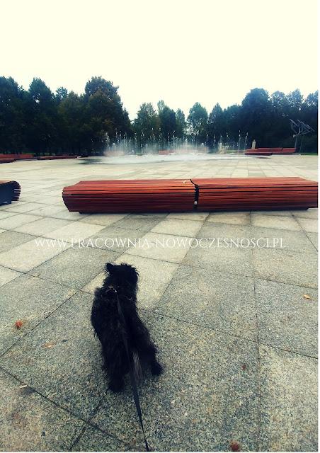 pies w warszawie
