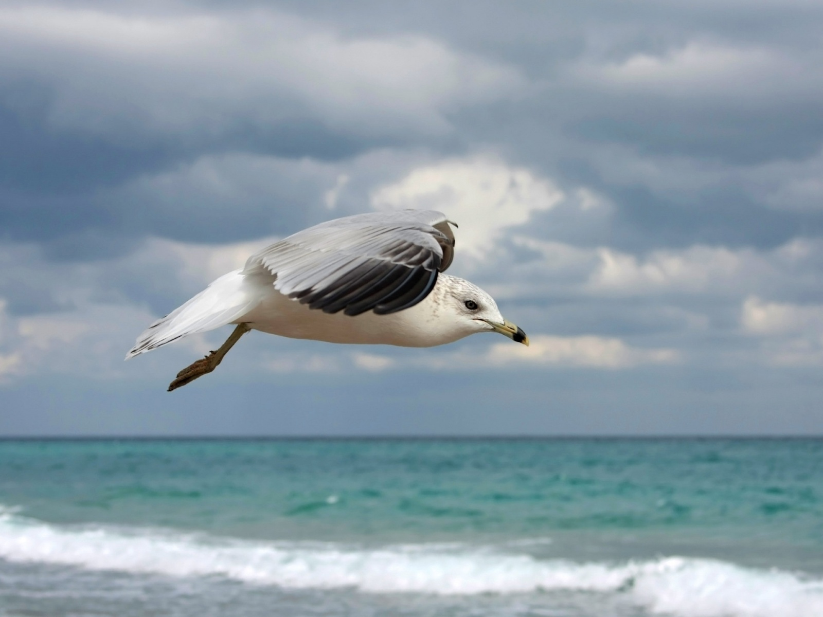 Wallpaper Collections Gull Backgrounds