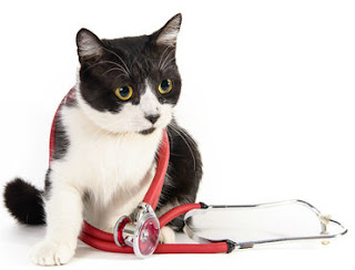 Having a cat friendly practice can pay off for vets.