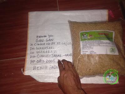 Benih Padi TRISAKTI pesanan GAN GAN  (Sebelum Packing)