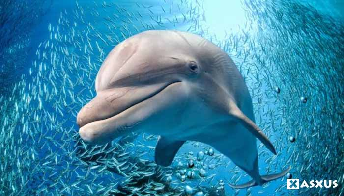 15 Nama Hewan Vertebrata Beserta Gambar, Ciri-Ciri, dan Penjelasannya