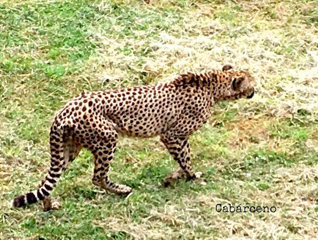 Cantabria viajar España animales