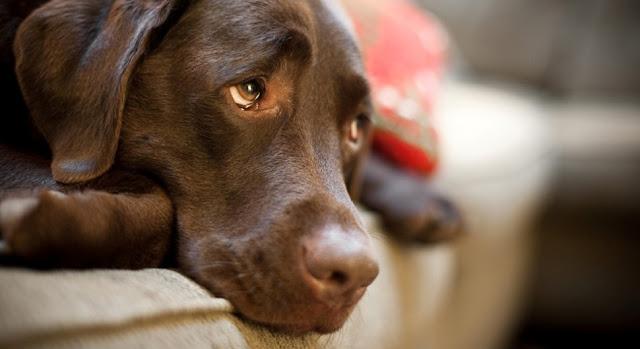 Αδιανόητο περιστατικό: Βρήκαν έμβρυο σε σώμα σκυλίτσας - Άφωνοι οι κτηνίατροι