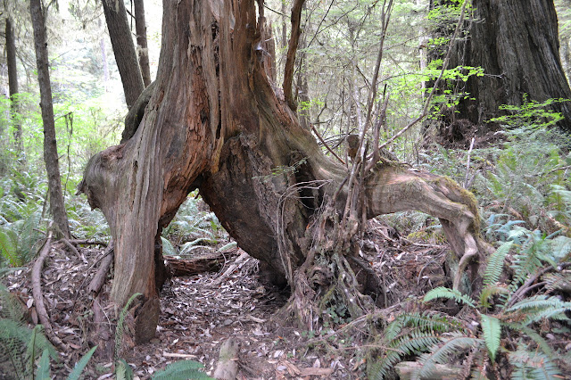 tree on legs