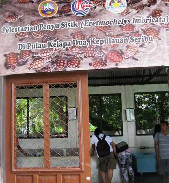 penangkaran penyu pulau kelapa dua kepulauan seribu