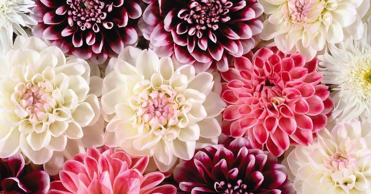 bloemen iphone achtergronden roze-#28