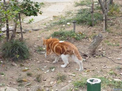 生國魂神社猫