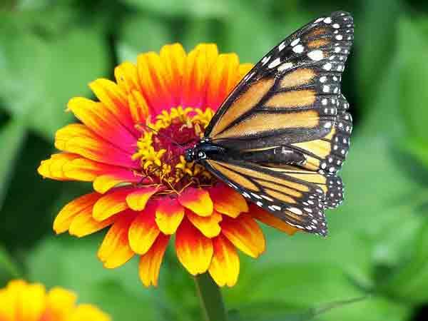 Unduh 430 Gambar Bunga Lengkap Beserta Fungsinya Paling Cantik HD