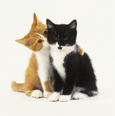 image of two kittens hugging