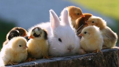 Cute-Baby-Animals-wallppapers