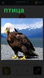 На фоне заснеженных гор показана хищная птица ястреб с крепким клювом и острыми когтями