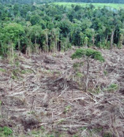Desmatamento - Sorriso na Web