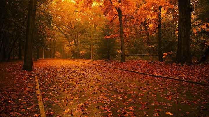 sonbahar resimleri