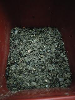 african nightcrawler, cacing, kompos, compost, vermicompost, vermikompos, casting, vermiculture, vermicompost bedding, coffee bedding