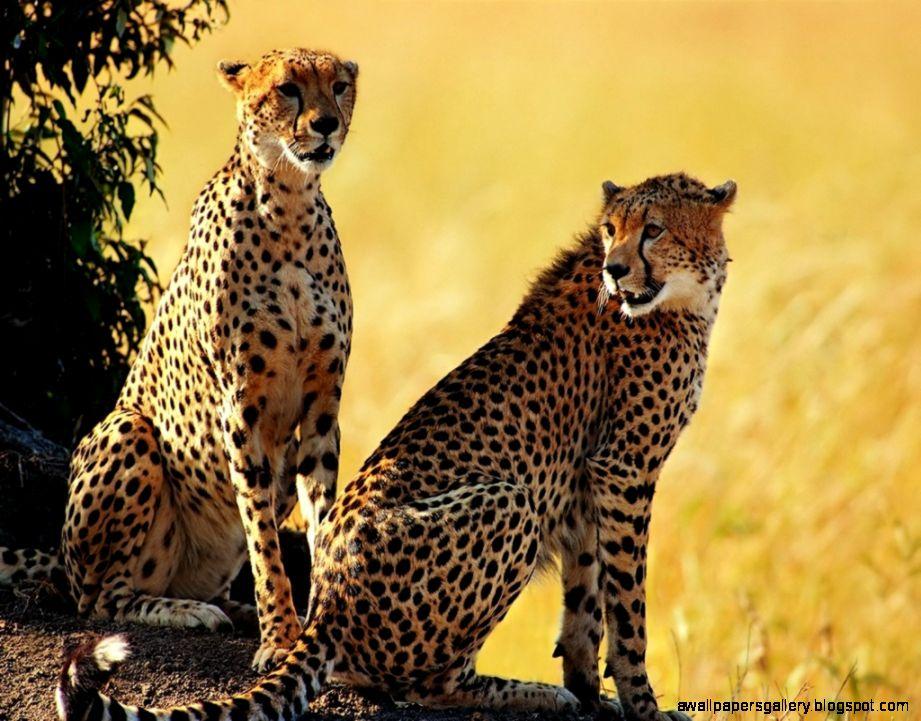 Beautiful Animals Safaris Safari Amazing Beautiful: African Wildlife Safari