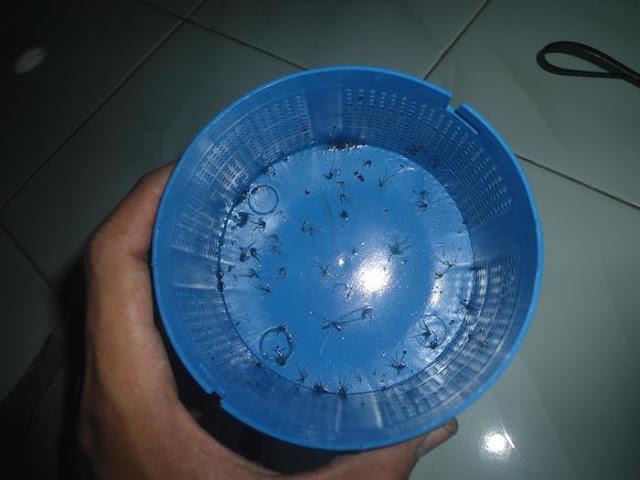 alat perangkap nyamuk