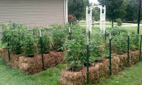 We can plant our vegetables in the straw bales.