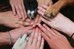 pets health dog depression