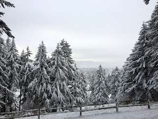 snowy fir trees scene in portland oregon