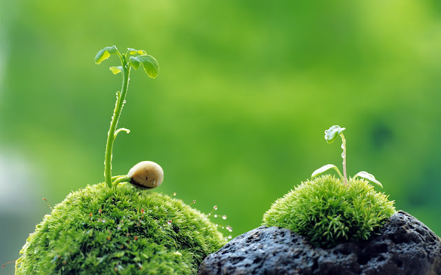 muschi pe piatra, germinare planta, melc pe muschi