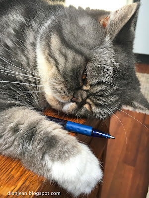 Popoki the cat and her ballpoint pen