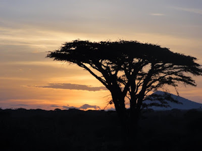 Tree in Tanzania during safari