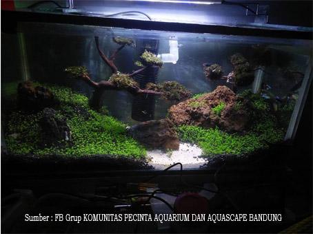 500 Ide Referensi Desain Aquascape HD Terbaik Download Gratis