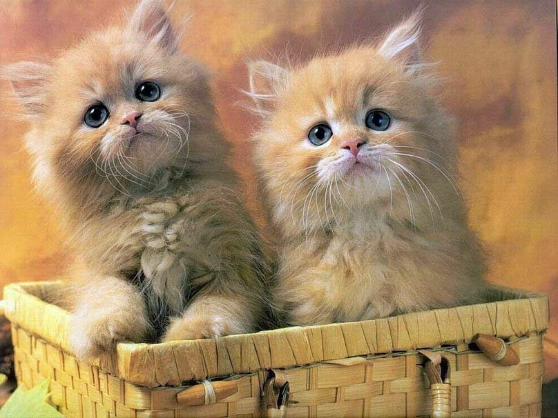cute-cats-wonderful pictures
