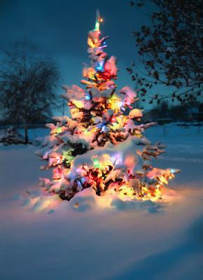 Arbolito de navidad con luces prendidas