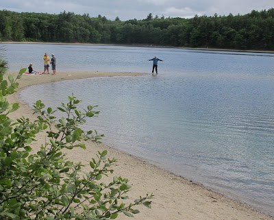 Walden Pond is not as pure as in Thoreau's time