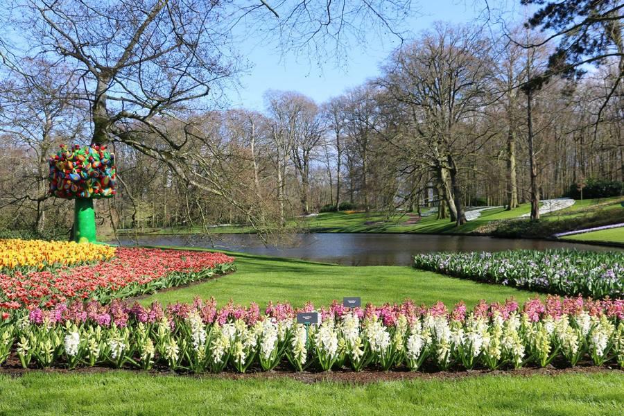 Tulipa Hyacinthus Keukenhof 2019 Flower Power