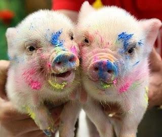 Ficha técnica dos mini-porcos  Os mini-porcos pesam em média 20 kg e crescem, geralmente, até os 35 cm de altura.    MINI-PORCOS - Fofos ? São encontrados nas cores: rosa, preto, marrom, branco com manchas pretas ou caramelo com machas pretas.  Vivem de 15 a 20 anos. Os preços varias de menos de 1.000 até mais de R$ 2.000.