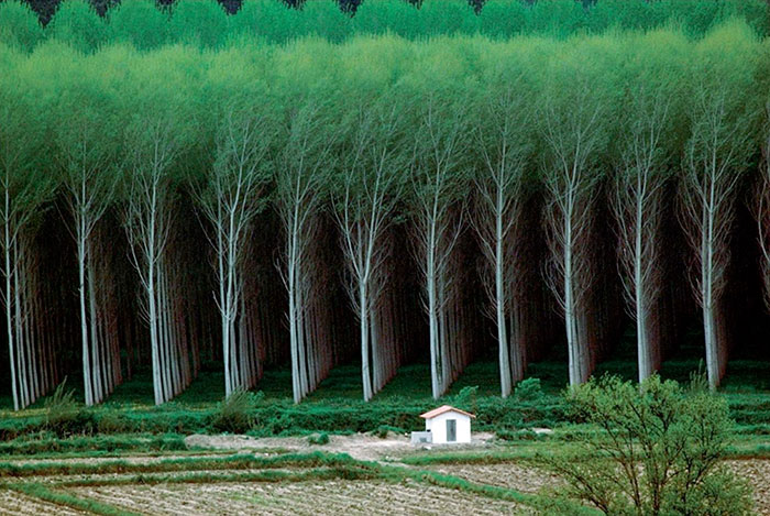 36 Unbelievable Pictures That Are Not Photoshopped - Perfect Forest
