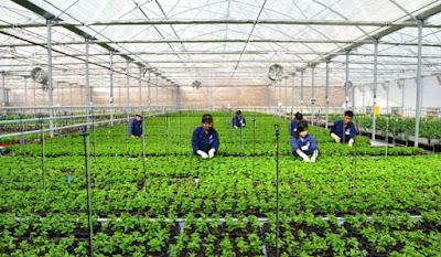 Tuyển 3 nữ lao động làm công việc trồng trọt tại Aichi Nhật Bản