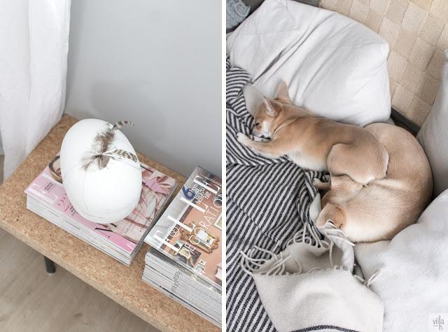 chihuahua, työhuone, sisustus