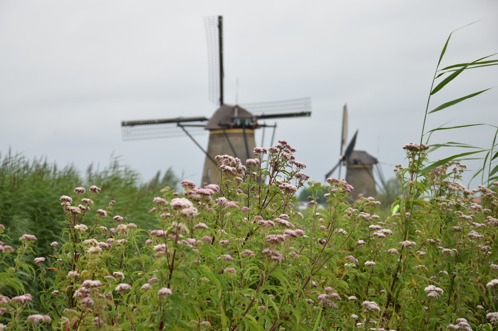 Holandia wiatrak Kinderdijk