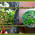 Jika anda ada penyakit gout dan sakit sendi, marilah mencuba petua tradisional iaitu dengan menggunakan daun sireh cina.. insha allah sangat berkesan!