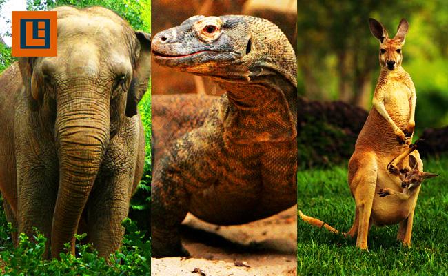 Fauna Asiatis, Peralihan, dan Australis