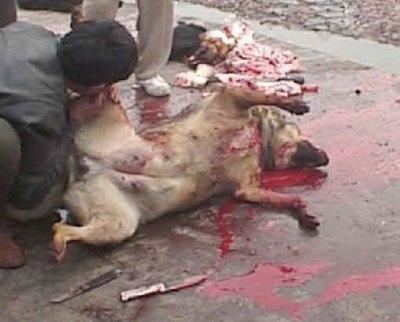 http://3.bp.blogspot.com/-2LnoKIwQ1t0/T3Mx5npJAwI/AAAAAAAAARk/hdAN6g_phT8/s640/149129-dog-fur-12.jpg