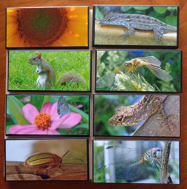 Naturegrams: Nature photos sealed onto ceramic tiles