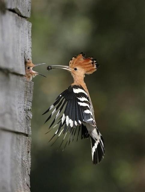 صور رائعة و نادرة لبعض الطيور و الحيوانات