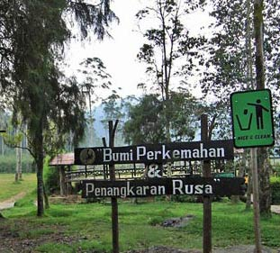 Bumi Perkemahan Ranca Upas Ciwidey Bandung