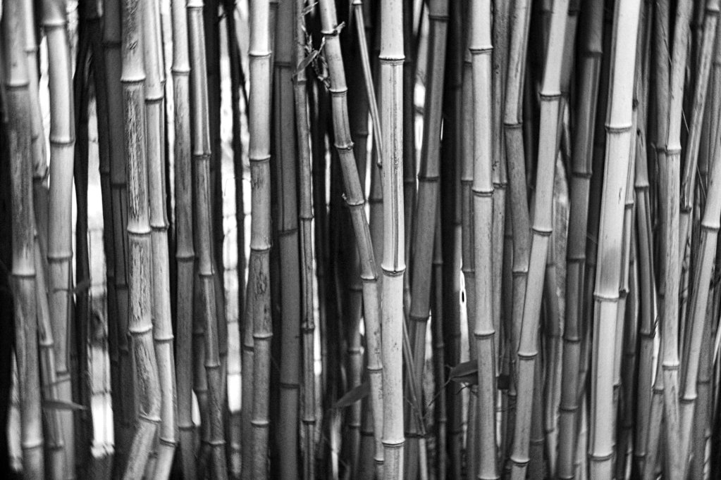 The Weekend in Black and White (07/2019) – Bamboo