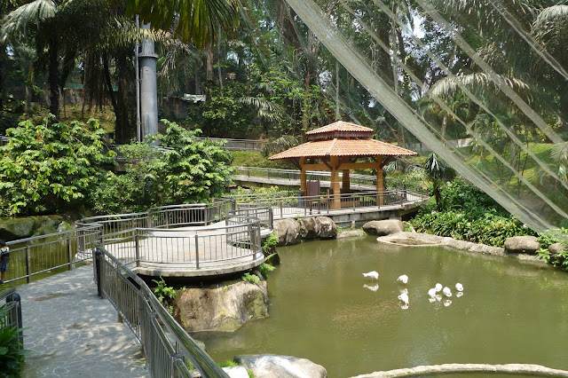 Ptaki w Kuala Lumpur